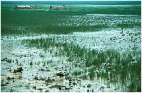 Marshland between the Tigris and Euphrates Rivers